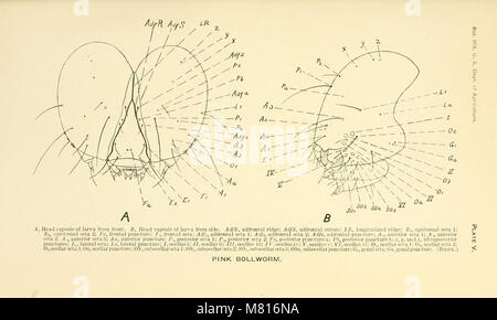 Bulletin of the U.S. Department of Agriculture (1098) (20491943652) - Stock Photo