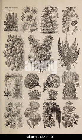 C.E. Allen's catalogue of seeds plants and small fruits (1884) (20593799891) - Stock Photo