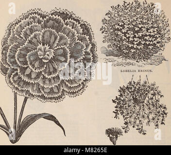 Buist's garden guide and almanac - 1898 (1898) (20562101172) - Stock Photo