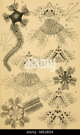 Bulletin biologique de la France et de la Belgique (1907) (20242267068) - Stock Photo