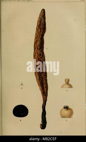Bulletin de l'Académie Royale des Sciences, des Lettres et des Beaux-Arts de Belgique (1841) (20242964778) - Stock Photo