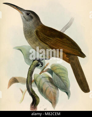 Catalogue of the Birds in the British Museum (1884 - 1884) (19955661004) - Stock Photo