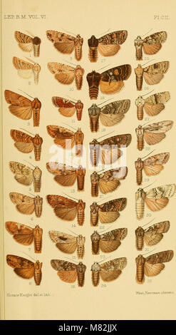 Catalogue of the Lepidoptera Phalænæ in the British museum (1903) (20556151916) - Stock Photo