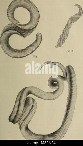Centralblatt für Bakteriologie, Parasitenkunde und Infektionskrankheiten (1902) (19965624024) - Stock Photo