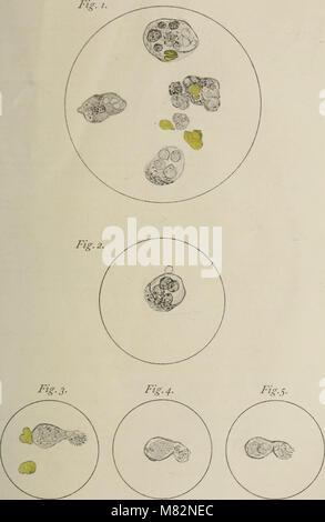 Centralblatt für Bakteriologie, Parasitenkunde und Infektionskrankheiten (1902) (20579212812) - Stock Photo