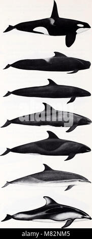 Cetaceans of the Channel Islands National Marine Sanctuary - prepared for National Oceanic and Atmospheric Administration, - Stock Photo