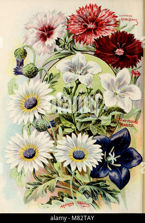 Childs' rare flowers, vegetables, and fruits (1902) (20606274795) - Stock Photo