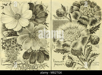 Childs' rare flowers, vegetables, and fruits (1907) (20419194220) - Stock Photo