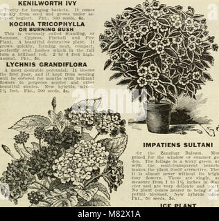 Choice flower seeds 1912 - compliments of Miss Emma V. White (1912) (20421646140) - Stock Photo