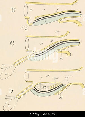 Comparative anatomy of vertebrates (1907) (20676863061) - Stock Photo