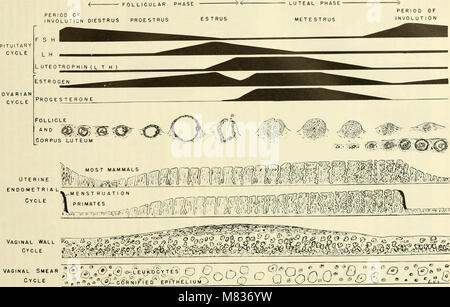Comparative embryology of the vertebrates; with 2057 drawings and photos. grouped as 380 illus (1953) (20482047670) - Stock Photo