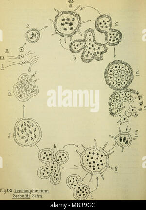 Confnces de zoologie faites a Sorbonne (1914) (20687450701) - Stock Photo