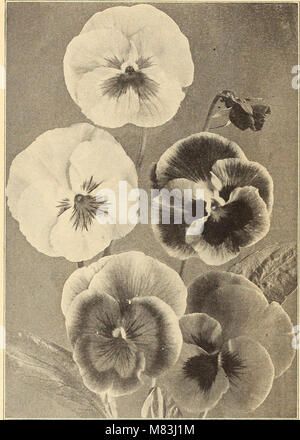 Currie's farm and garden annual - spring 1916 (1916) (14598382887) - Stock Photo