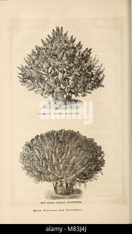 Curtis, Cobb and Washburn's amateur cultivator's guide to the flower and kitchen garden for 1878 (1878) (20198340753) - Stock Photo