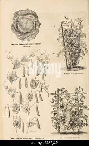 Curtis, Cobb and Washburn's amateur cultivator's guide to the flower and kitchen garden for 1878 (1878) (20631361240) - Stock Photo