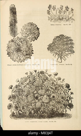 Curtis, Cobb and Washburn's amateur cultivator's guide to the flower and kitchen garden for 1878 (1878) (20792875376) - Stock Photo