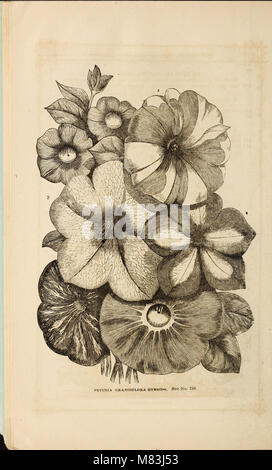 Curtis, Cobb and Washburn's amateur cultivator's guide to the flower and kitchen garden for 1878 (1878) (20819244465) - Stock Photo
