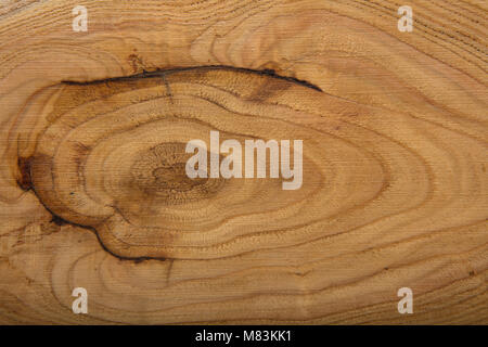Close up view of a wood background with annual rings. High resolution image. Detailed organic surface from nature - Stock Photo