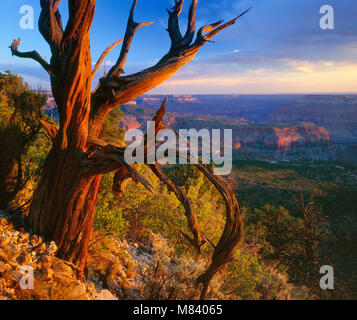 Crazy Jug Point, North Rim, Grand Canyon National Park, Arizona - Stock Photo