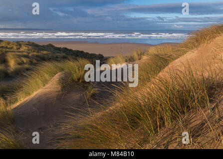 Saunton Sands from the sand dunes of Braunton Burrows, Devon, England. Winter (January) 2018. - Stock Photo