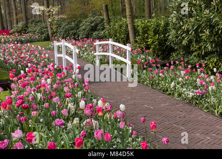 romantic path in the park between blooming colorful tulips and - Stock Photo