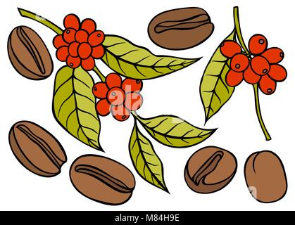 Coffee branch with leaf and berry. Hand drawn sketch style. Vintage color vector illustration for label, web. Isolated - Stock Photo