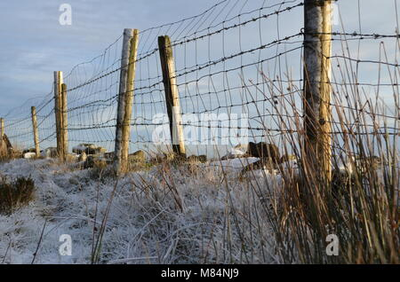 Frosty Fences - Stock Photo