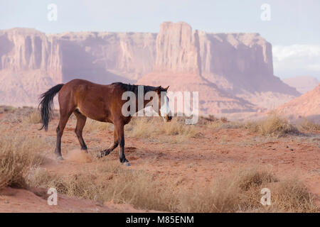 Wild horse with blue eyes and sandstone buttes off in the distance, Monument Valley Tribal Park, Arizona - Stock Photo