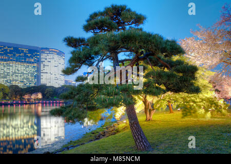 Tree at Hamarikyu (also Hama Rikyu) Gardens and modern skyscrapers of Shiodome Area, Chuo Ward, Tokyo, Kanto Region, - Stock Photo