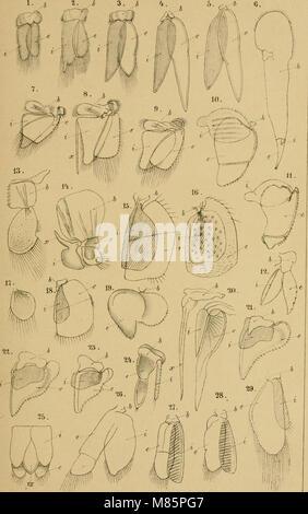 Dr. H.G. Bronn's Klassen und Ordnungen des Thier-Reichs, wissenschaftlich dargestellt in Wort und Bild (1916) (20897938058) - Stock Photo
