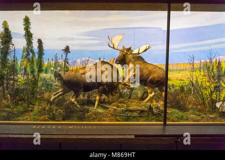 wild animals natural history museum bourges cher 18 france stock photo 24466148 alamy. Black Bedroom Furniture Sets. Home Design Ideas