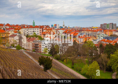 Vineyards in the old European city, on the hill of the Grobe Villa, the Czech Republic - Stock Photo