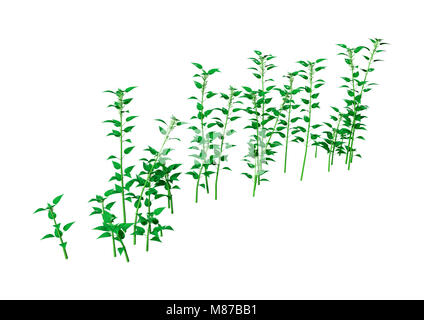 3D rendering of Urtica dioica, or common nettle, or stinging nettle isolated on white background - Stock Photo