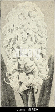 Dreer's 1908 autumn catalogue (1908) (20378406453) - Stock Photo