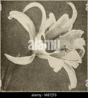 Dreer's garden book 1925 (1925) (20835684569) - Stock Photo