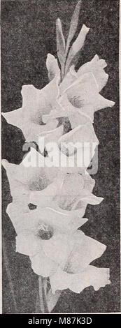 Dreer's wholesale catalog for florists and market gardeners - 1939 winter spring summer (1939) (21052379415) - Stock Photo