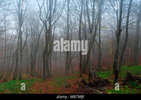 Mystical autumn forest in the fog - Stock Photo