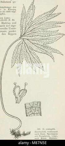 Die Farnkräuter der Erde - beschreibende Darstellung der geschlechter und wichtigeren Arten der Farnpflanzen mit - Stock Photo