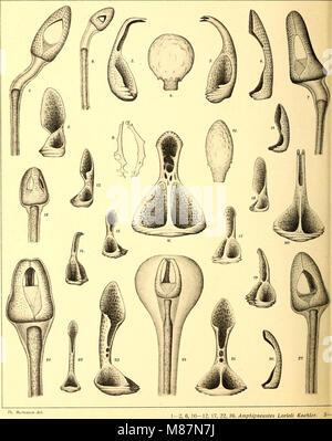 Echinoidea of the Swedish South Polar Expedition (1910) (20517378124) - Stock Photo