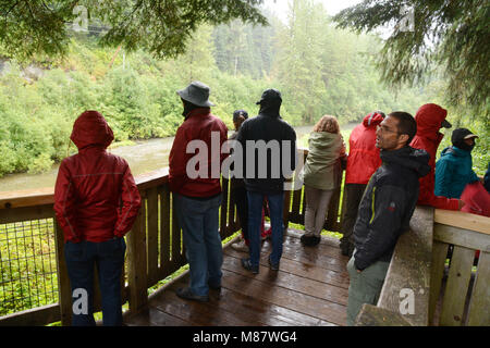 Tourists on the bear viewing platform at the Fish Creek Wildlife Observation Site, in the Tongass National Forest, - Stock Photo