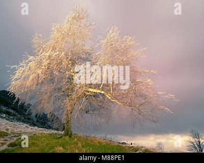 Icy tree branches sway in freeze wind at night. Shinning ice on twigs, on the branches, the ice covered the bark - Stock Photo