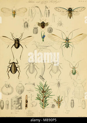 Die forst-insecten - oder Abbildung und beschreibung der in den wäldern Preussens und der nachbarstaaten als schädlich - Stock Photo