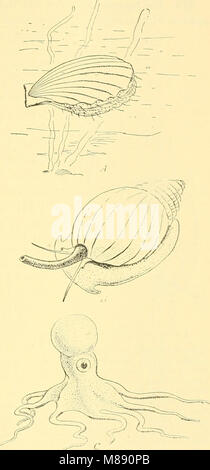 Elementary biology; an introduction to the science of life (1924) (21026575410) - Stock Photo