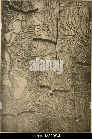 Die Forstinsekten Mitteleuropas. Ein Lehr- und Handbuch (1914) (20890498086) - Stock Photo