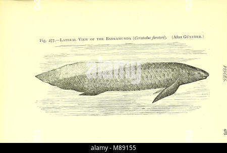 Elementary text-book of zoology (electronic resource) (1901) (20359404651) - Stock Photo