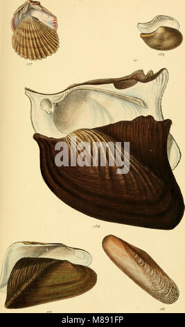 Elements of conchology - an introduction to the natural history of shells and of the animals which form them (1860) - Stock Photo