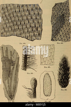 Elements of geology - a text-book for colleges and for the general reader (1892) (21069141118) - Stock Photo