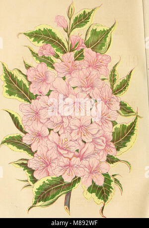 Ellwanger and Barry's descriptive catalogue of hardy ornamental trees and shrubs, roses, etc., etc., etc (1868) - Stock Photo