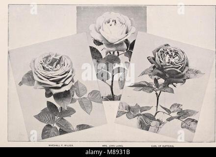 Ellwanger and Barry - Mount Hope nurseries (1898) (20652460074)