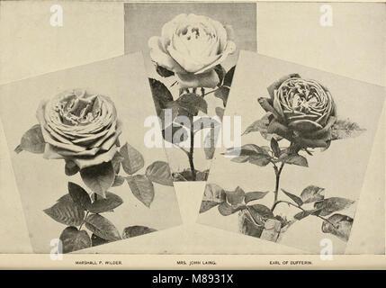 Ellwanger and Barry - Mount Hope nurseries (1899) (21264961732)